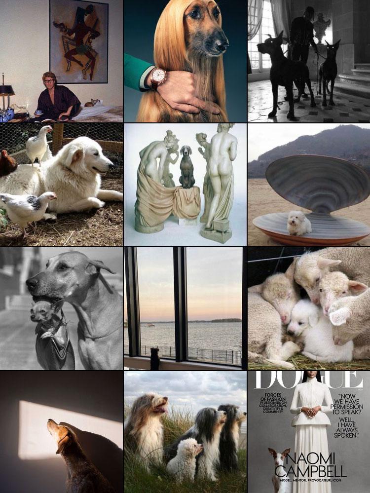 Dogue-Feed-1